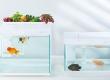 Розумний акваріум Smart Fish Tank – фахівці екосистеми MIOT не перестають дивувати вас!