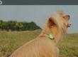Xiaomi представить «розумний» медальйон для домашніх тварин