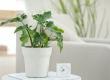 Smart Flower Pot - горщик  з розумними функціями для рослин  від Xiaomi