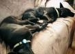 Amazpet Smart Dog Tag – в рік Собаки не забудьте подбати про свого домашнього вихованця!